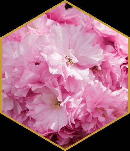 Roku Gin - Sakura-Blume